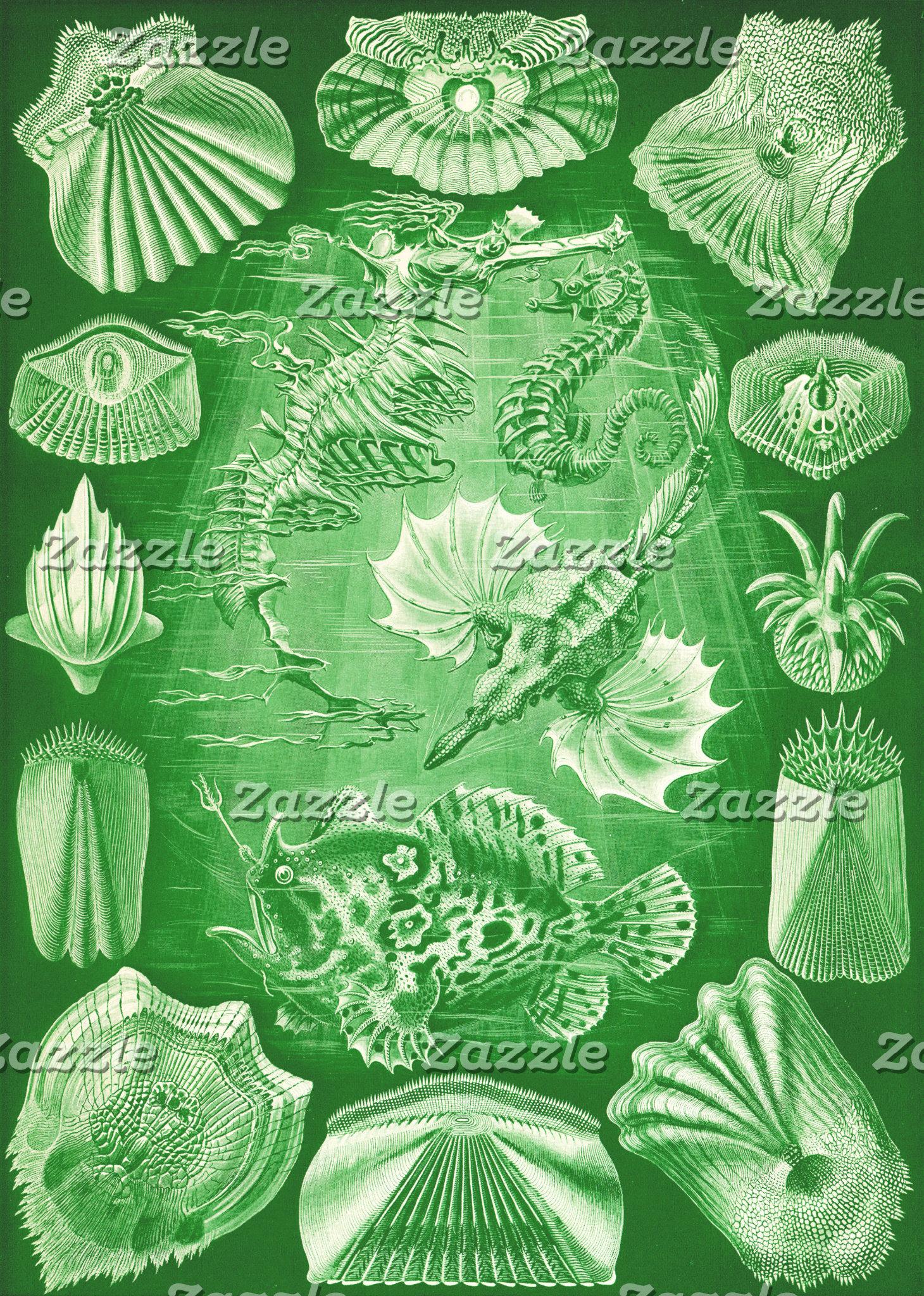 Ernst Haeckel Teleostei