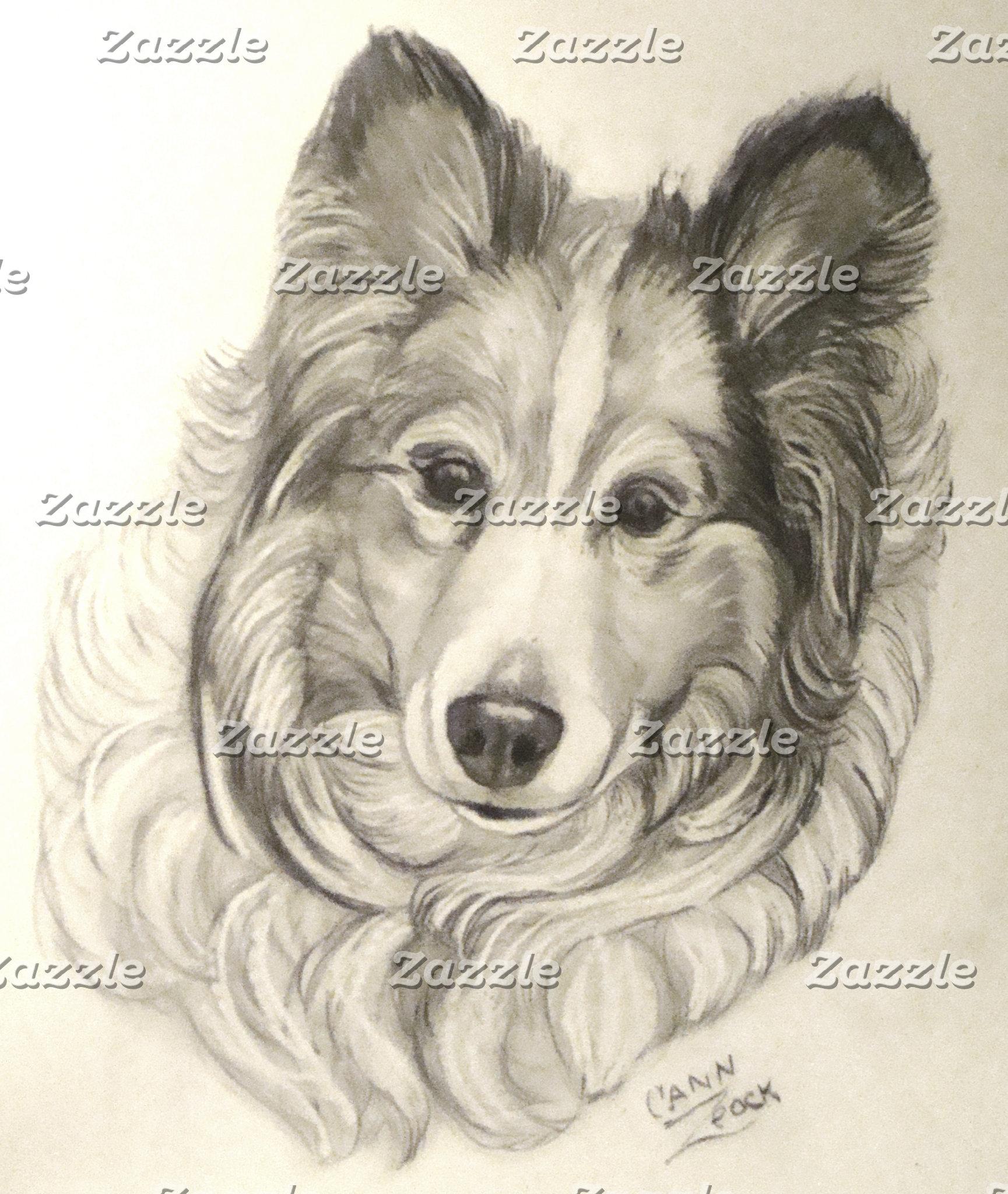 dogs Shetland Sheepdog