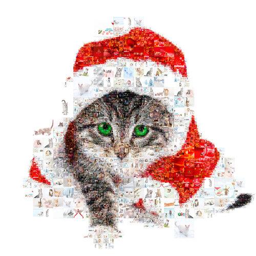 santa claus cat - cat collage - kitty - cat love