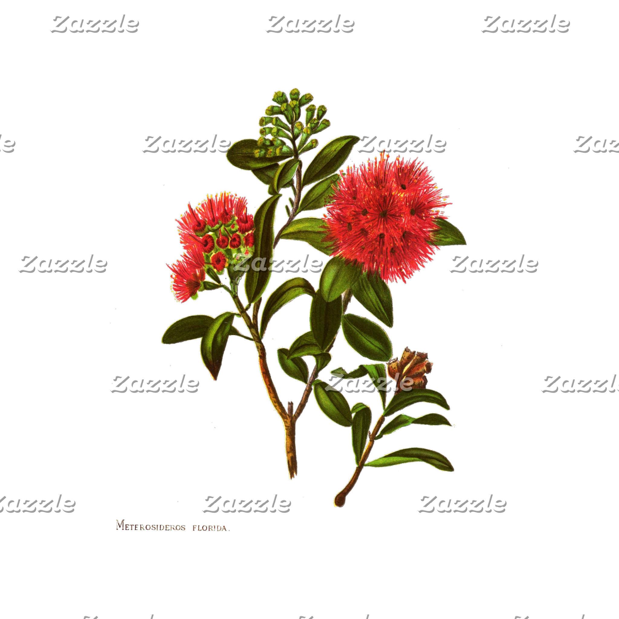 NZ Flowers