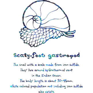 【スケーリーフット(螺鈿風-青】 Scaly-foot gastropod (Blue Raden)
