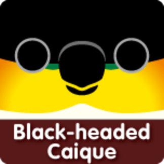 Black-headed Caique