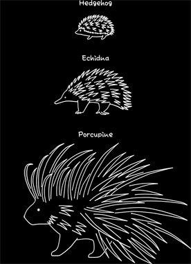 【はりーず(英語-白】 Hedgehog, Echidna, Porcupine (En-white