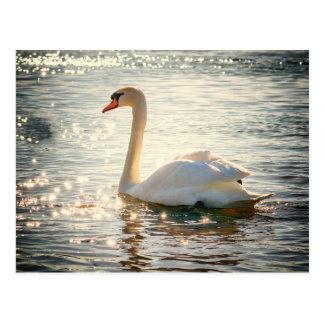 Swan postcard ポストカード