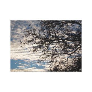 Sycamore Tree in Cloudy Sky near Sundown in Winter キャンバスプリント