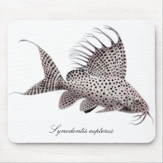 Synodontisのeupterus マウスパッド