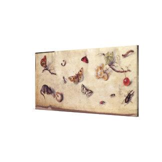 T31566さまざまな昆虫、フルーツおよびAnimaの勉強 キャンバスプリント