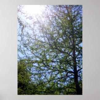 Tamarackのカラマツ木2ポスター ポスター