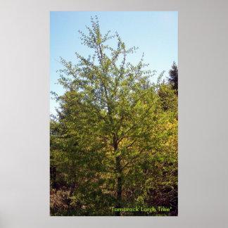 Tamarackのカラマツ木3ポスター ポスター