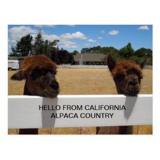 Templeton、カリフォルニアのアルパカ ポストカード