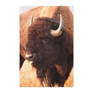 Tetonのアメリカ野牛(バイソンのバイソン)の群れ キャンバスプリント