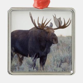 Tetonの壮大な国立公園、Bullのアメリカヘラジカ メタルオーナメント