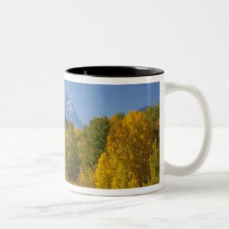 Tetonの山地7が付いている《植物》アスペンの木 ツートーンマグカップ