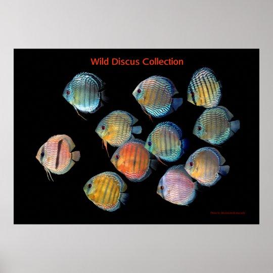 The Art of Wild Discusfish ポスター