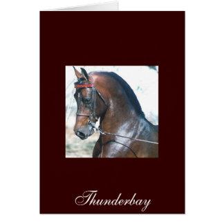 Thunderbay カード