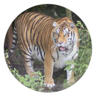 tiger2-10x10 プレート
