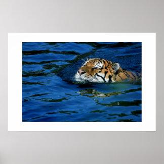 Tiger#8ポスター ポスター