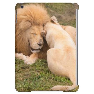 Timbavatiの白人のライオンの男性および女性のポートレート