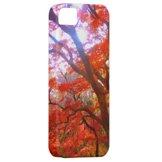 Tinted autumn leaves iPhone 5 ケース