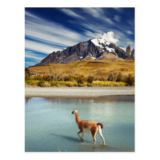 Torres del Paineの川を交差させているグアナコ ポストカード