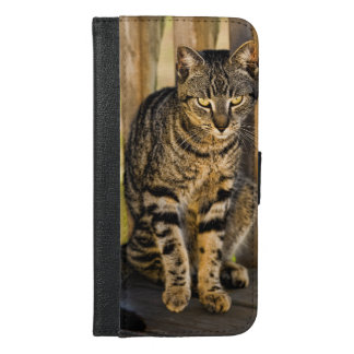 Tortoiseshell猫のポートレート、クローズアップの写真 iPhone 6/6s Plus ウォレットケース