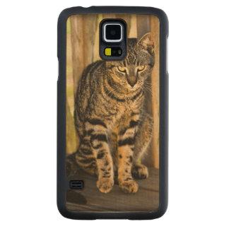 Tortoiseshell猫のポートレート、クローズアップ動物の写真 CarvedメープルGalaxy S5スリムケース