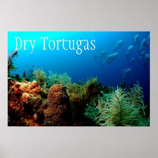 Tortugasの乾燥した国立公園、珊瑚礁 ポスター