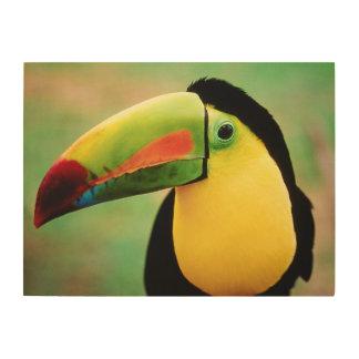 Toucanの鳥の野生の自然のカラフルの写真撮影 ウッドウォールアート