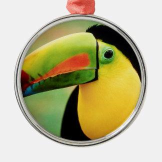 Toucanの鳥の野生の自然のカラフルの写真撮影 メタルオーナメント