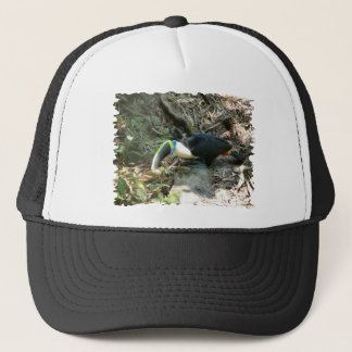 Toucanは森林床の木の根でとまります キャップ
