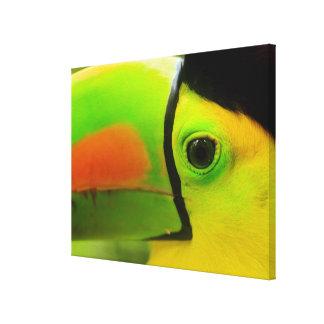 Toucanは、ベリセ近く直面します キャンバスプリント