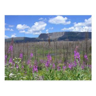 trapper's湖のFireweedの花 ポストカード