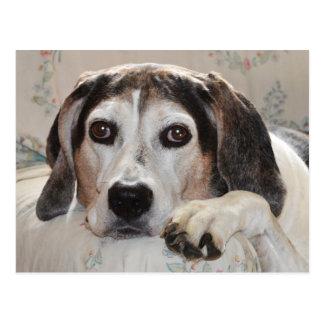 Treeingの歩行者のCoonhound犬 ポストカード