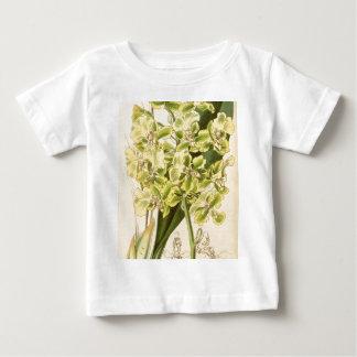 Trichocentrumのbicallosum (Oncidiumのbicallosumとして) ベビーTシャツ