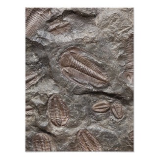 Trilobiteの化石: TRILOBITESの化石ポスター ポスター