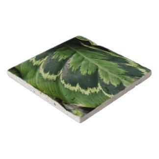 Trivet -ばら色のCalathea トリベット