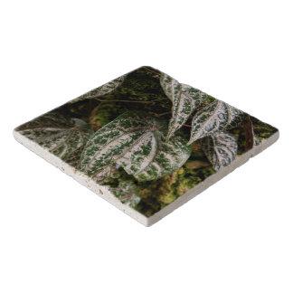 Trivet -セレベス島のコショウ トリベット