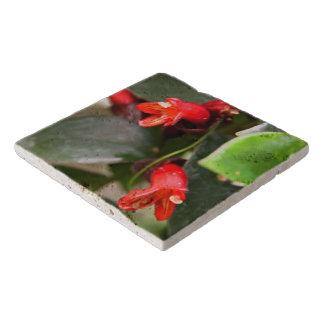 Trivet -口紅のつる植物 トリベット