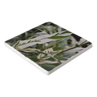 Trivet -雑色のショウガ トリベット