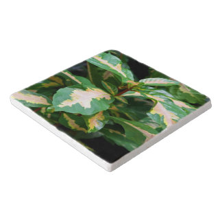 Trivet - Tricoloredの風刺漫画植物 トリベット
