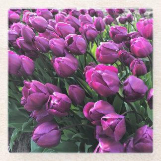 Tulips紫色の王子 ガラスコースター