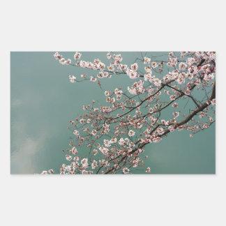 turquoisの背景の淡いピンクの桜 長方形シール