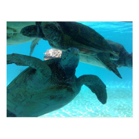 turtle ポストカード