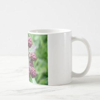 Unripeブラックベリーの束 コーヒーマグカップ