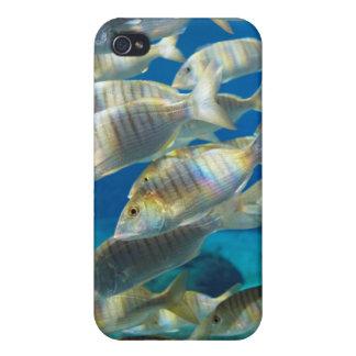 Ushakaの海洋の世界、ダーバンのアクアリウム iPhone 4/4S カバー