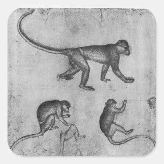 Vallardiのアルバムからの猿、 スクエアシール