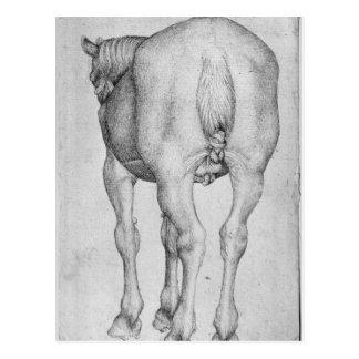 Vallardiのアルバムからの馬、 ポストカード