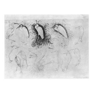 Vallardiのアルバムからの14羽の白鷺、 ポストカード