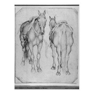 Vallardiのアルバムからの2頭の馬、 ポストカード