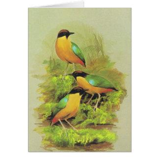 versicolor騒々しいPitta - Pitta カード